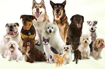 Clinical Pet Nutritionist Online Training Course
