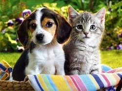 Clinical Pet Nutrition Online Training Course