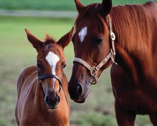 Equine Massage Training Certification Online